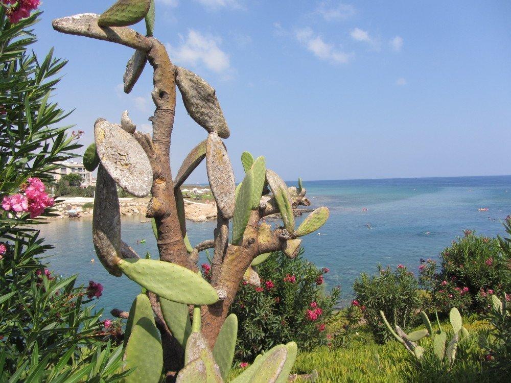 malama beach cyprus